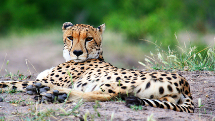 8-Day Grand South Africa Luxury Safari
